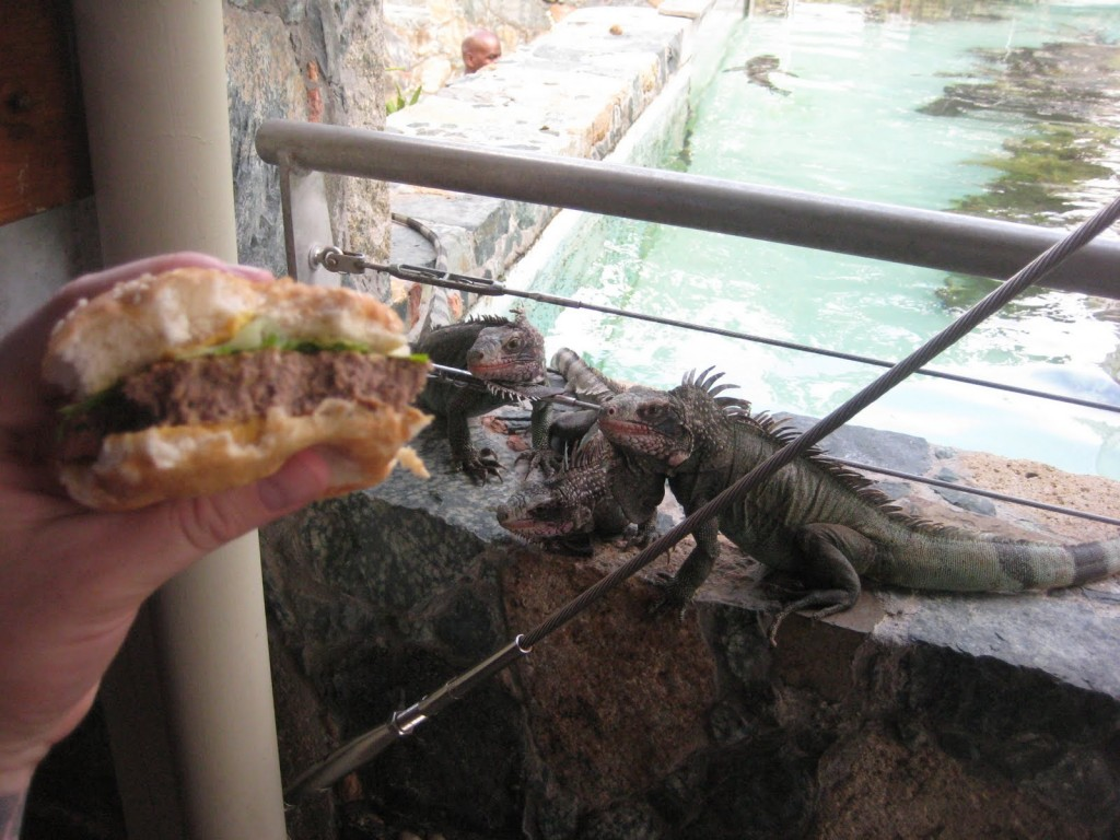 Burger_Conquest_Coral_World_Shark_bar_St_Thomas_Matt_and_Ginas_Wedding_181_lizards